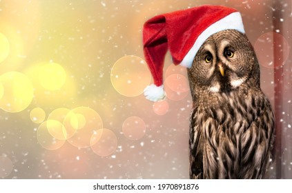 Merry Christmas greeting card with forest owl close up.Funny new year tawny owl in a red Santa hat is on festive background with beautiful bokeh, garland lights and falling snow.Copy space for text