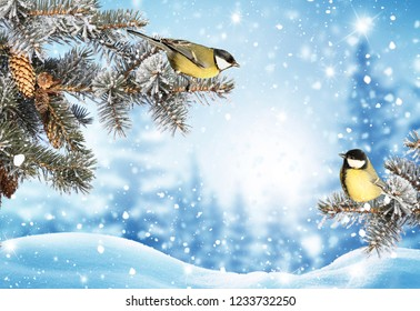 Merry Christmas and happy new year greeting background. Winter landscape with snow .Christmas birds on fir tree branch
