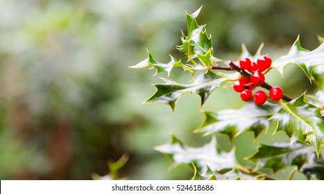 Merry Christmas realistic thistle red berry email ot top header background greetings shot in Virginia Water
