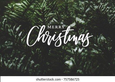 Merry Christmas Text Over Winter Evergreen Branches Covered in Snow