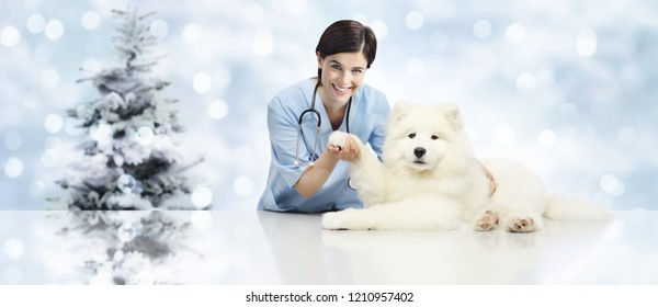 Merry Christmas from veterinary, vet clinic with veterinarian and dog pet, xmas tree background, gift card banner web template with copy space
