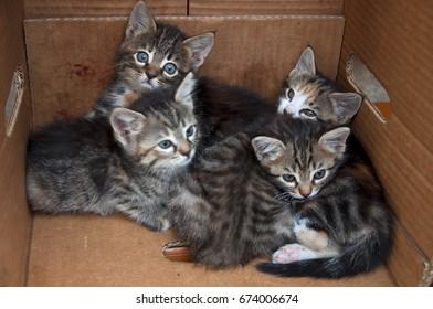 Mersin,Turkey-April 13,2013:Kitten in the box