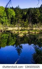 Mertve or Zhuravlyne Lake in the forest in carpathian mountains, national park Skolevski beskidy, Lviv region of Western Ukraine. Lake name translate from ukranian as Dead or Cranes.