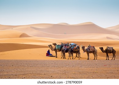 MERZOUGA, MOROCCO, APRIL 13, 2015: Local guides wait for tourists with camels used for tours into the erg