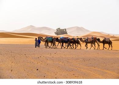 MERZOUGA, MOROCCO, APRIL 13, 2015: Camels caravan on sand dunes of Erg Chebbi