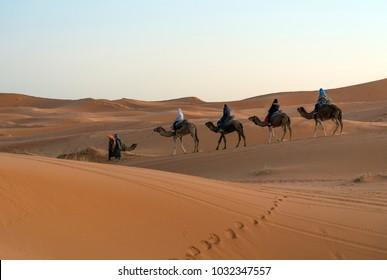 Merzouga, Morocco - December 29, 2017: Camels in Sahara desert near Merzouga village.