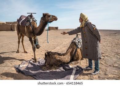 MERZOUGA, MOROCCO - JANUARY 8, 2017: Berber man feeding his camel.