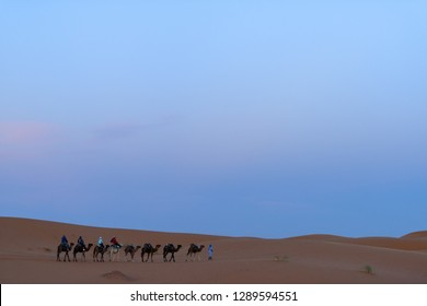 Merzouga, Morocco - October 21, 2018: Guide walking tourists astride of camels to a desert camp in the evening