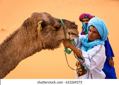 MERZOUGA, MOROCCO - OCTOBER 22 2013: Berbers trying to tie up an angry camel at a camp in Erg Chebbi. Erg Chebbi is one of Morocco's two Saharan ergs – large seas of dunes formed by wind-blown sand