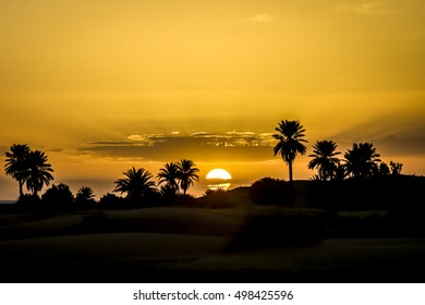 Merzouga, Morocco. Palms and clouds during a warm surinse in the desert.