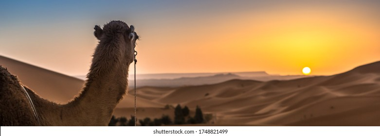 Merzouga in the Sahara Desert in Morocco. Afica. Web banner in panoramic view.