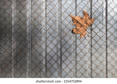 Mesh fence in which maple leaf stuck