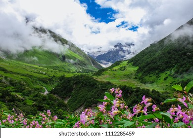 The mesmerizing beauty of valley of flowers captured in the month of August