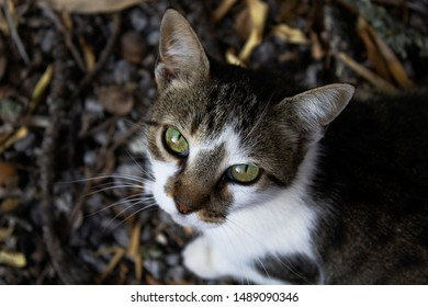 A mesmerizing cat look. Hunting cat in the garden.