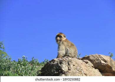 A mesmerizing shot of a little monkey resting on the stone at sunny day