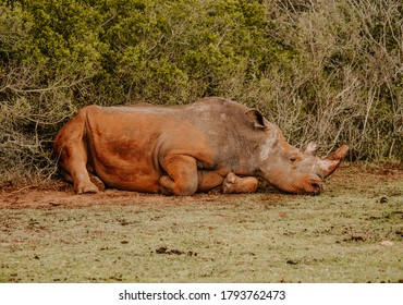 A mesmerizing shot of a rhinoceros on the green grass at daytime