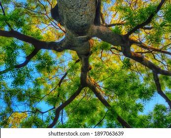 Mesmerizing tree in the Amstelpark Amsterdam