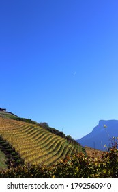 A mesmerizing view of a vineyard on the hill under a blue sky