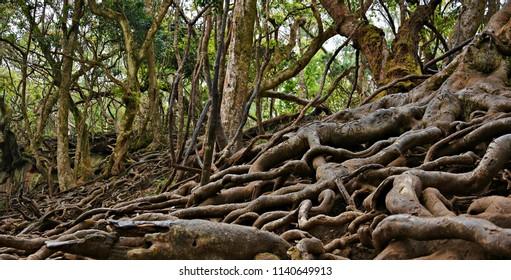"""Mesmerizing views of Kodaikanal"" - Roots of Guna Caves."