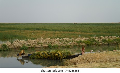 Mesopotamian Marshes, habitat of Marsh Arabs aka Madans - 04-11-2011 Basra Iraq
