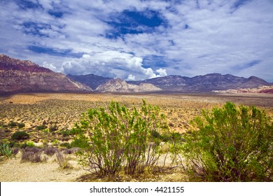 Mesquite frames an expanse of Red Rock Canyon National Conservation Area under beautiful broken clouds