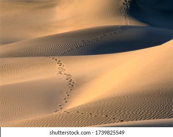 The Mesquite Sand Dunes in Death Valley National Park in California USA with footsteps