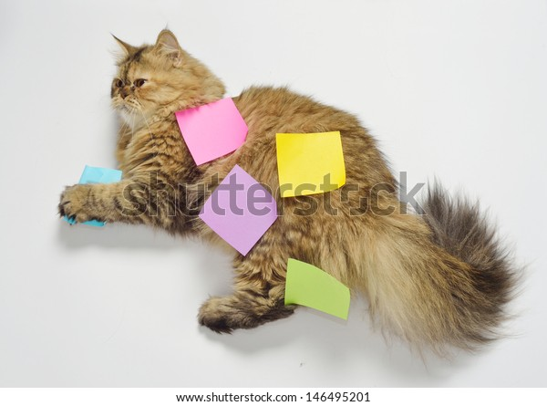 message in cat