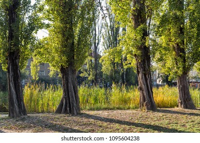 Mestsky or City park in Kosice Old Town, Slovakia. Kosice was the European Capital of Culture in 2013. - Shutterstock ID 1095604238