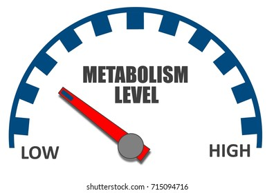 Metabolism Level