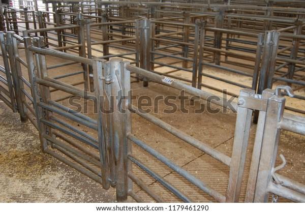 Metal Animal Pens Gates Sheep Market Stock Photo (Edit Now