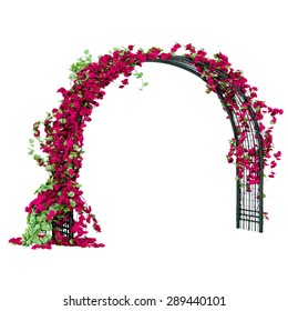 Metal arbor with red rose buds and green leaves pergola