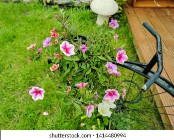 Metal Planters Images Stock Photos Vectors Shutterstock