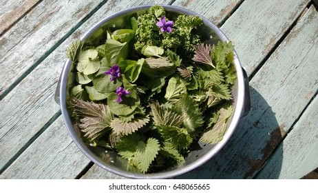 A metal  bowl of foraged edible flowers and plants from the home garden  of nettles, violets, spinach on a vintage wooden table in the sunshine in Summer