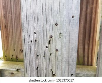 metal bullets or spheres and holes in wood fencing