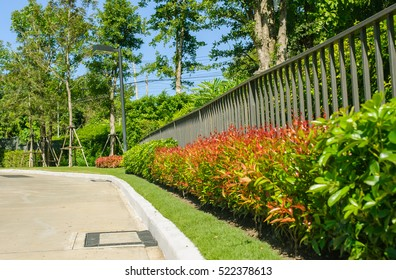 Metal fence with ornamental shrubs furnished with. The metal fence is out to look beautiful.
