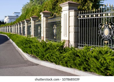 Metal forged fence with evergreen plants and shrubs decorating
