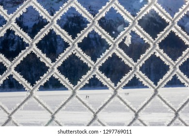 Metal grid fence covered with fresh fluffy frost