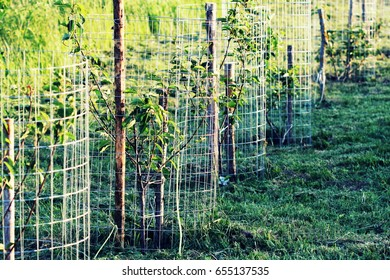 Metal guard mesh protection for animal damaged tree bark