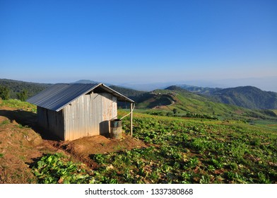 Metal hut in cabbage garden with mountain view on morning