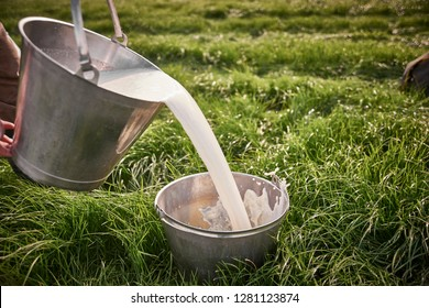 metal pail holding milk on a backgound of grass