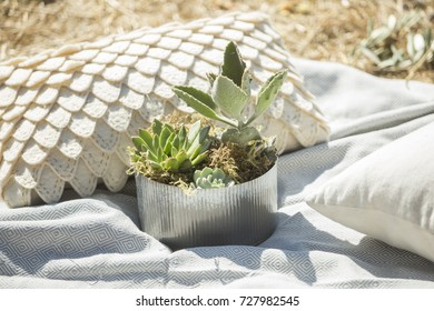 a metal planter full of succulents sits on a blanket with decorative pillows. Outdoor party/ wedding reception/ picnic concept.