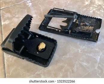 Metal and plastic mouse trap close up oblique view
