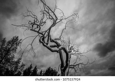 metal tree against dramatic sky