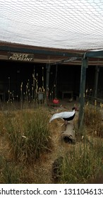 metal wire fence for bird enclosure with silver pheasant sign