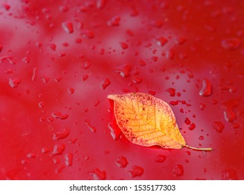 Metallic red car hood with autumn leaves and raindrops.