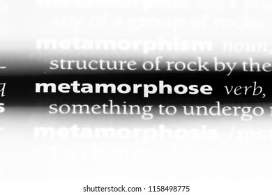 metamorphose word in a dictionary. metamorphose concept.