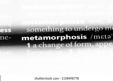 metamorphosis word in a dictionary. metamorphosis concept.