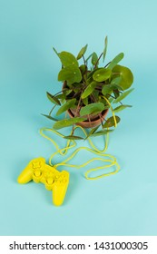 Metaphor of man wanting to control nature. A joystick yellow connected to a plant pilea peperomioid pilea peperomioidby a cable. Minimal color and absurd color photography