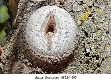 metaphor of sex, pussy, symmetrical photograph of vulva of wood of tree, vagina of wood, vagina in branch of tree, clítoris, branch of cut tree imitating to a vulva,  vagina vegetable, orgasm, sexy,