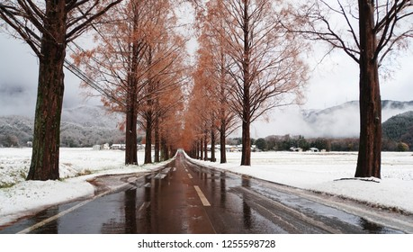 Metasequoia forest with white snow at the street (part3)